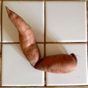 What a sweet potato actually looks like, sometimes.